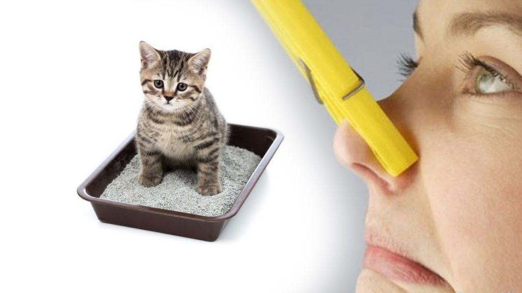 Как убрать запах кошачьей урины