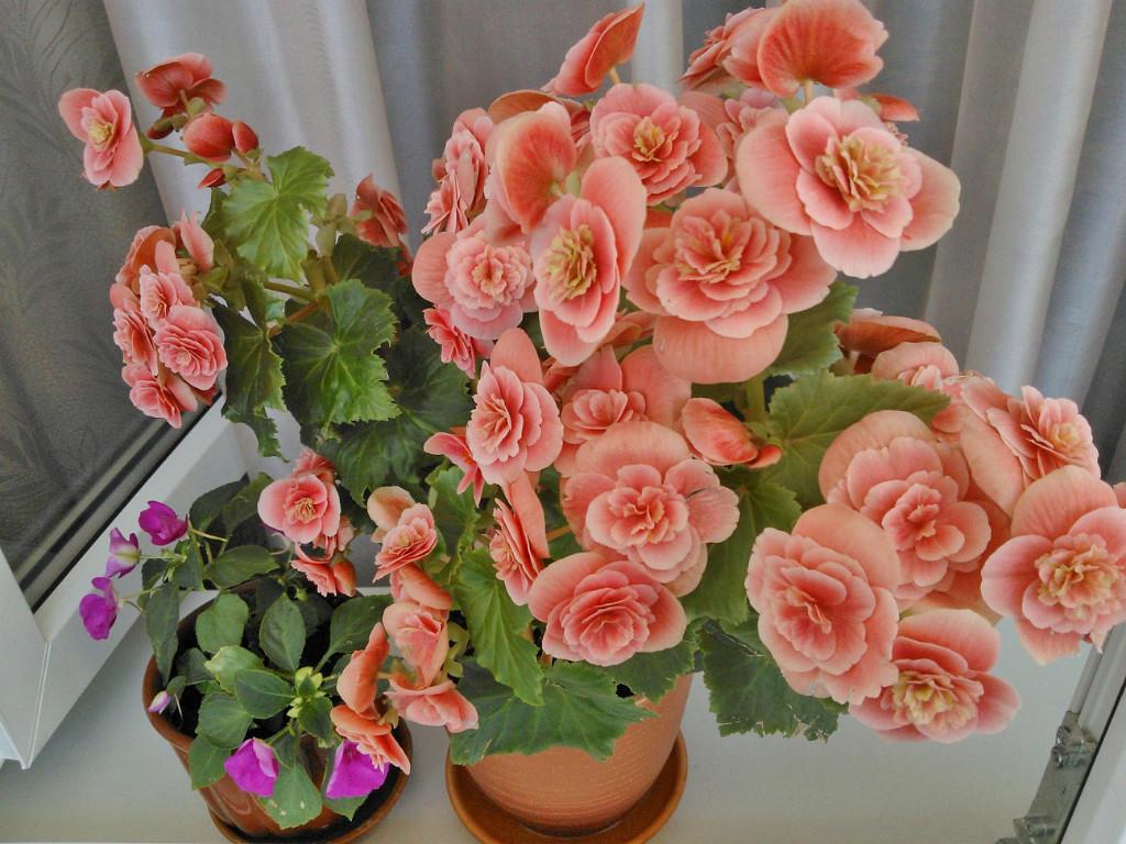 Фаза цветеия