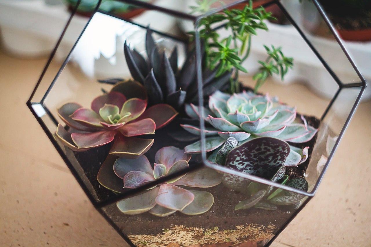 Флорариум для растений своими руками фото 683