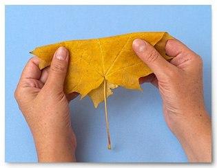 sgibaem Осенние букеты своими руками - более 100 идей в детский сад и школу